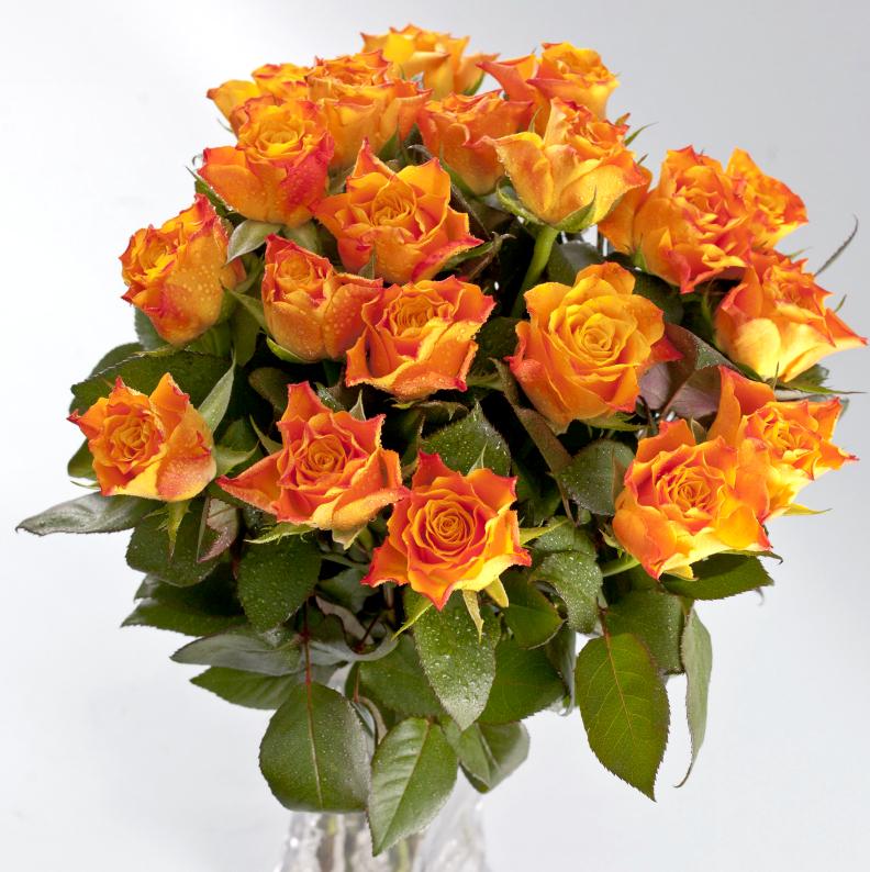 оранжевые розы букет фото сейчас широкопалый