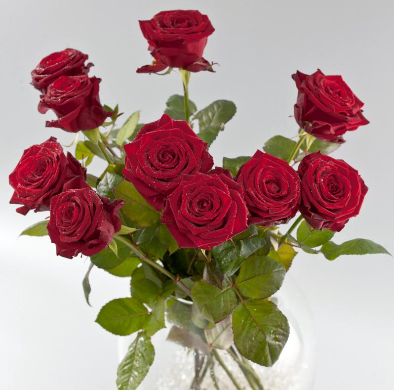 Punane roosikimp jardin lilled for Jardin lilled