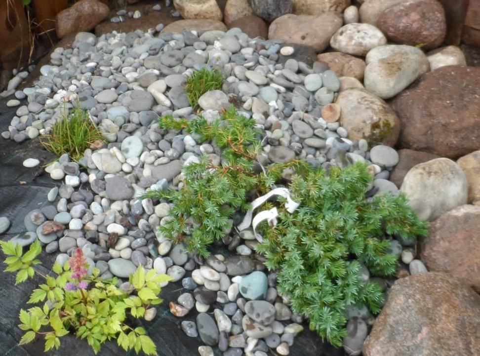 Kiviktaimla lilled jardin lilled for Jardin lilled