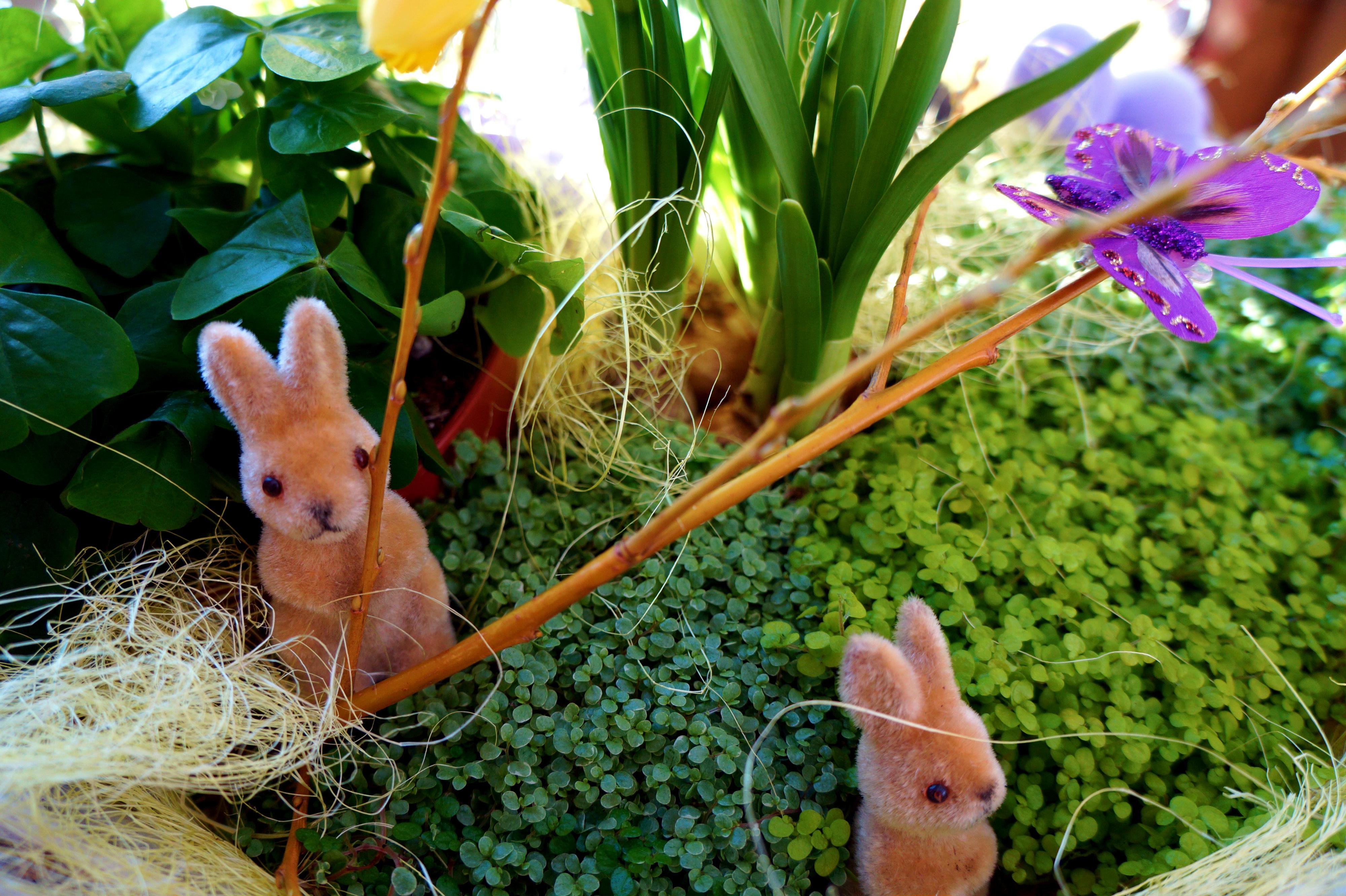 Kevad jardini aianduskeskuses 2016 jardin lilled for Jardin lilled