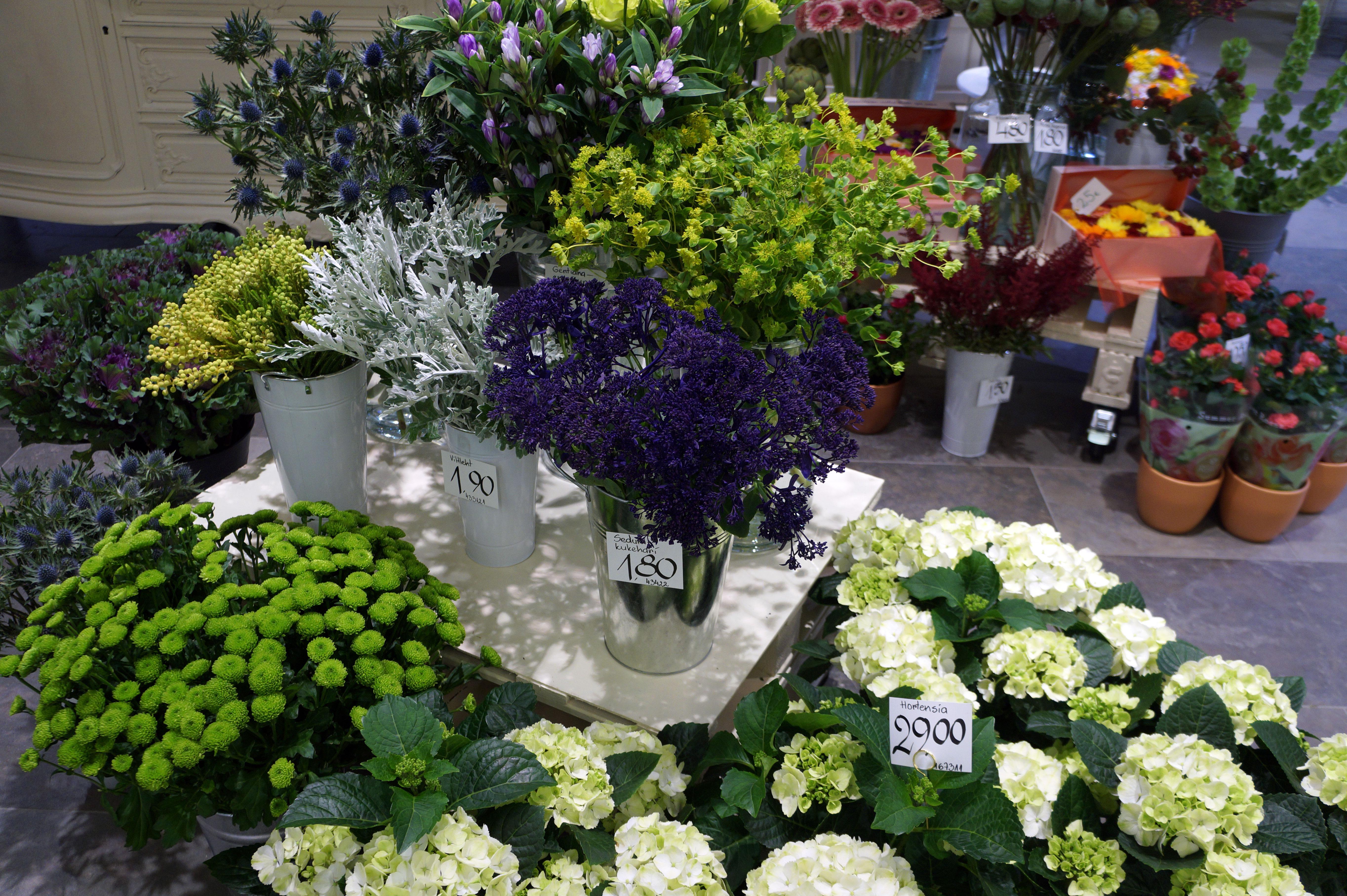 Dsc08626v jardin lilled for Jardin lilled